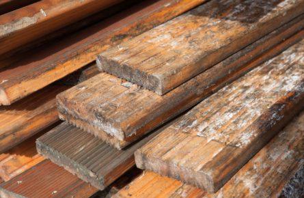 Fungos e mofos em madeira – como evitar e remover