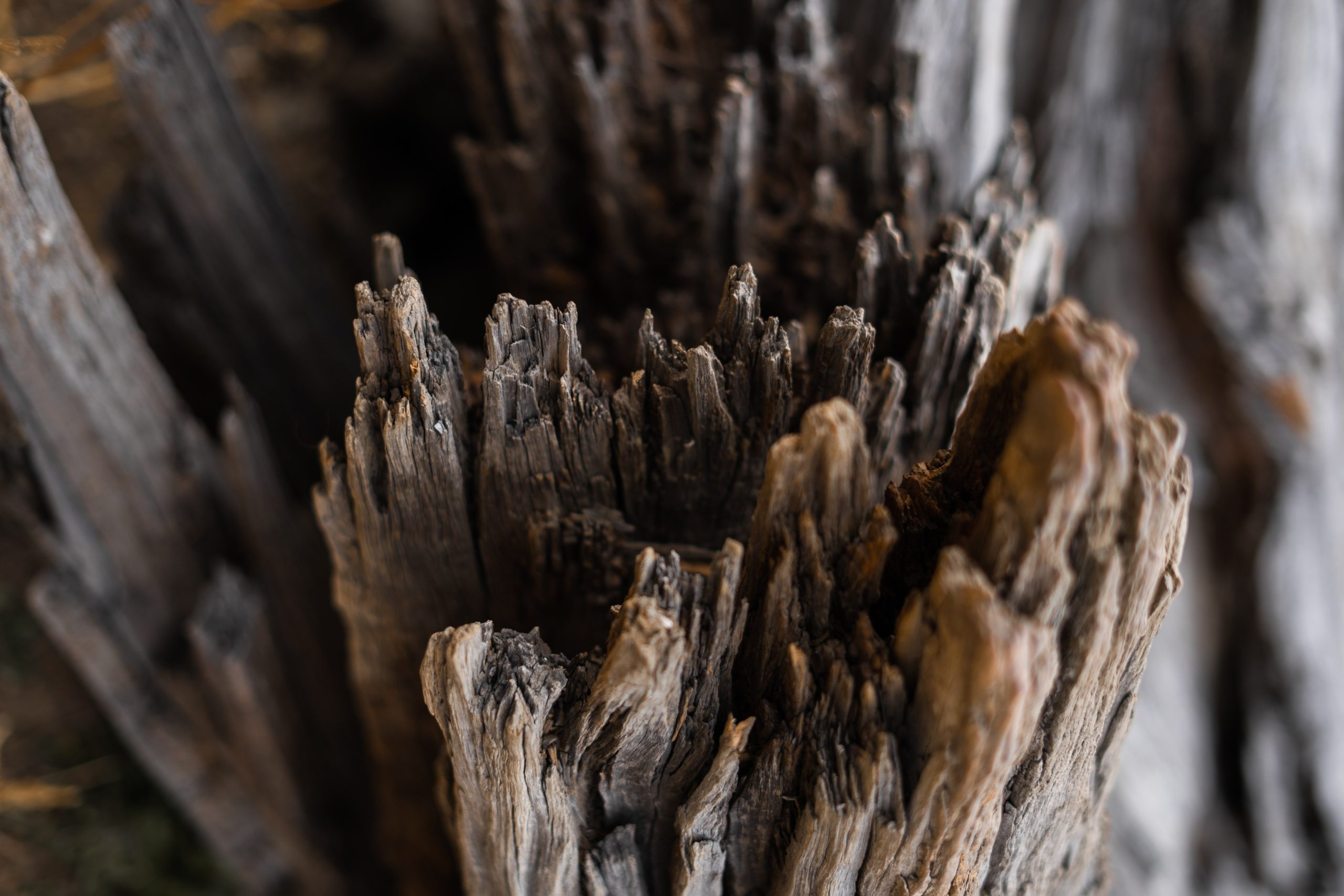 Quatro coisas que acabam com a madeira